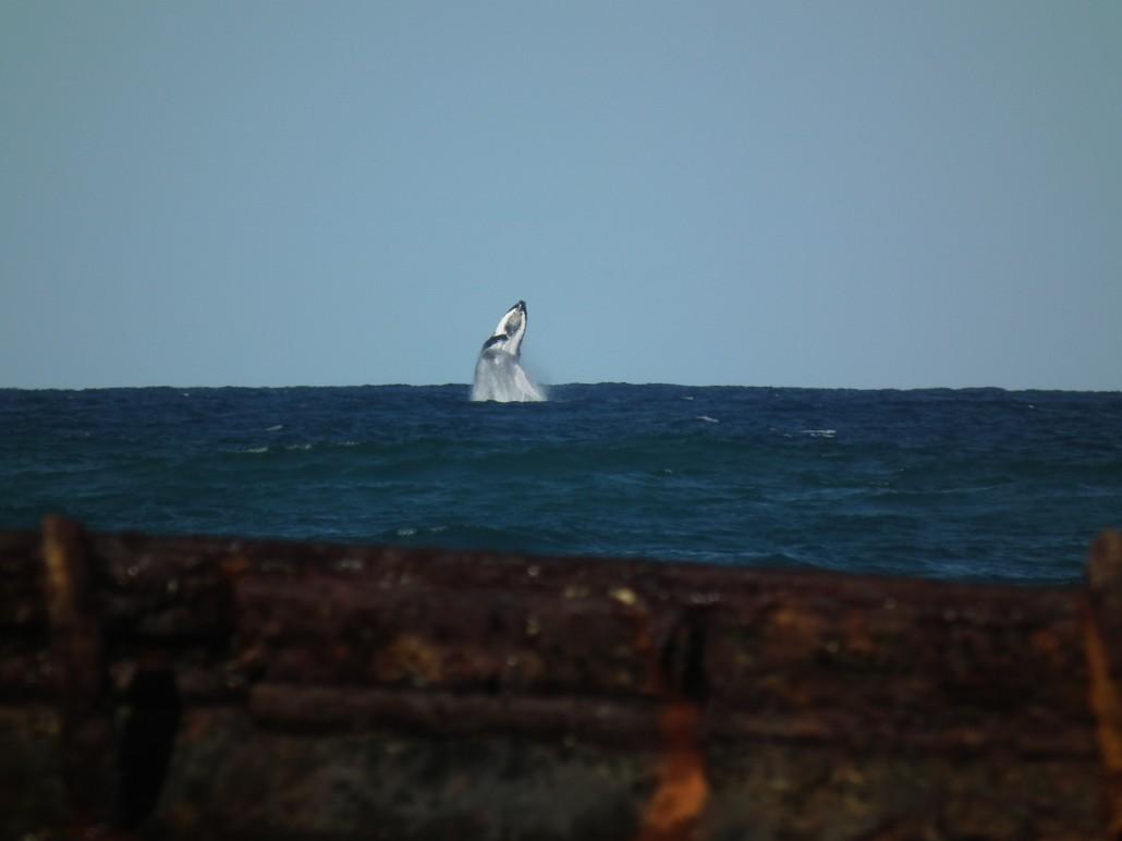 Fraser Island (26-09-2012 / 30-09-2012)