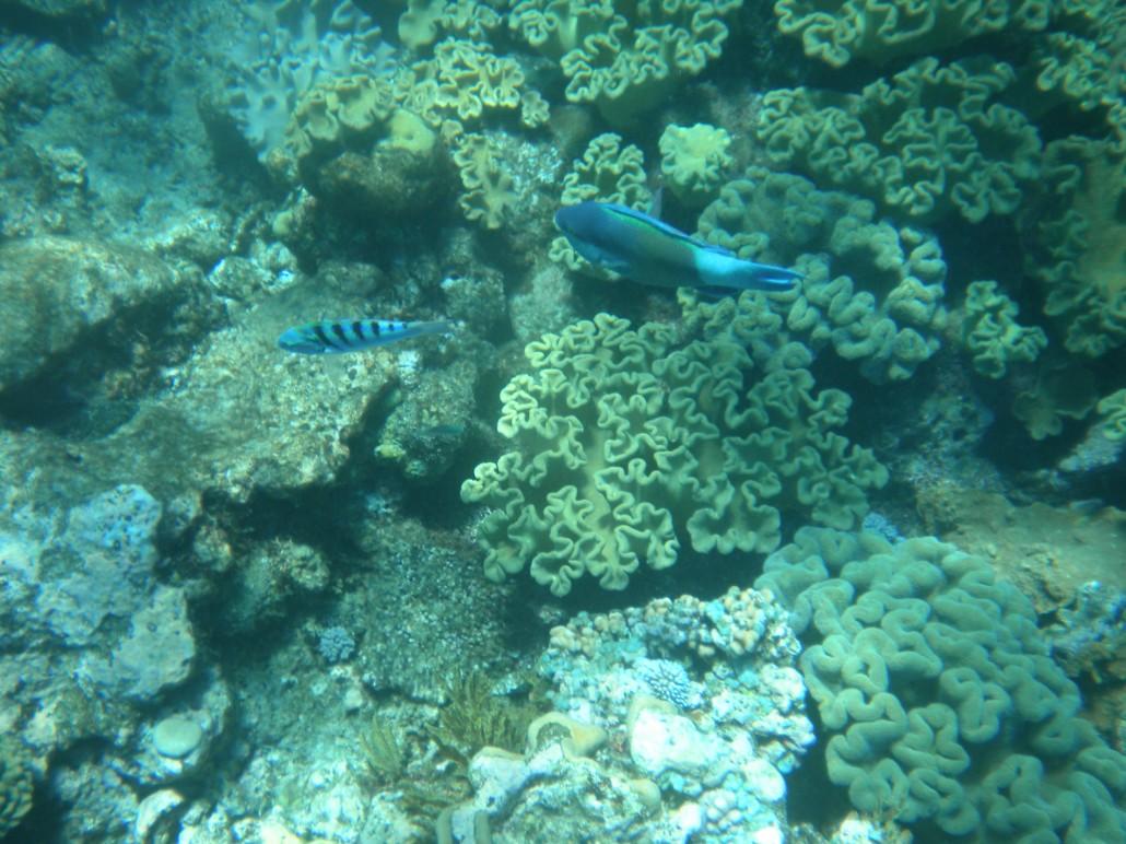 Snorkelen en duiken in Cairns (20-09-2012)