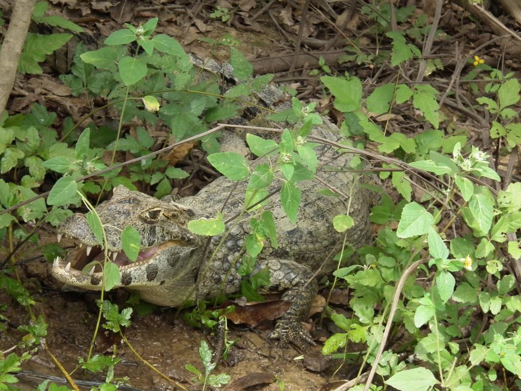 Rurrenabaque (02-12-2012 / 08-12-2012)